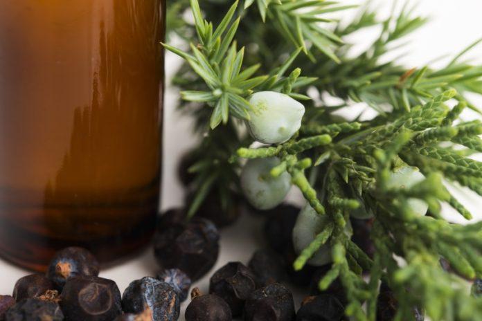 olejek z jałowca