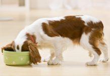 olej kokosowy dla psa