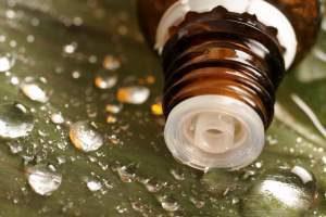 olejek z drzewa herbacianego właściwości