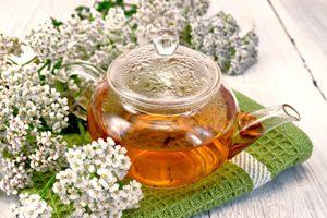 herbata z krwawnika pospolitego