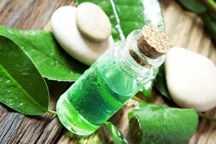 olejek z zielonej herbaty